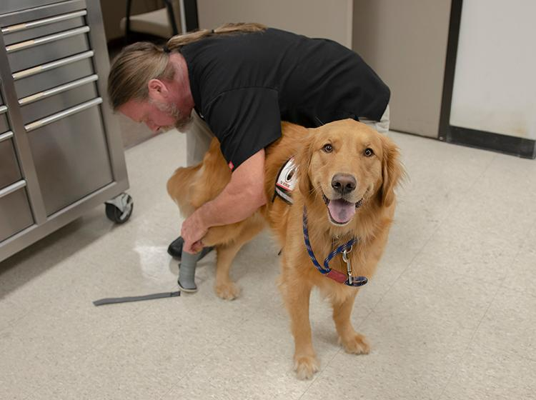 Honor, a service dog from the Jack C. Montgomery VA Medical Center